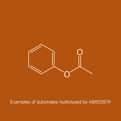 Example of substrates hydrolyzed by AB503574 | Phenyl acetate