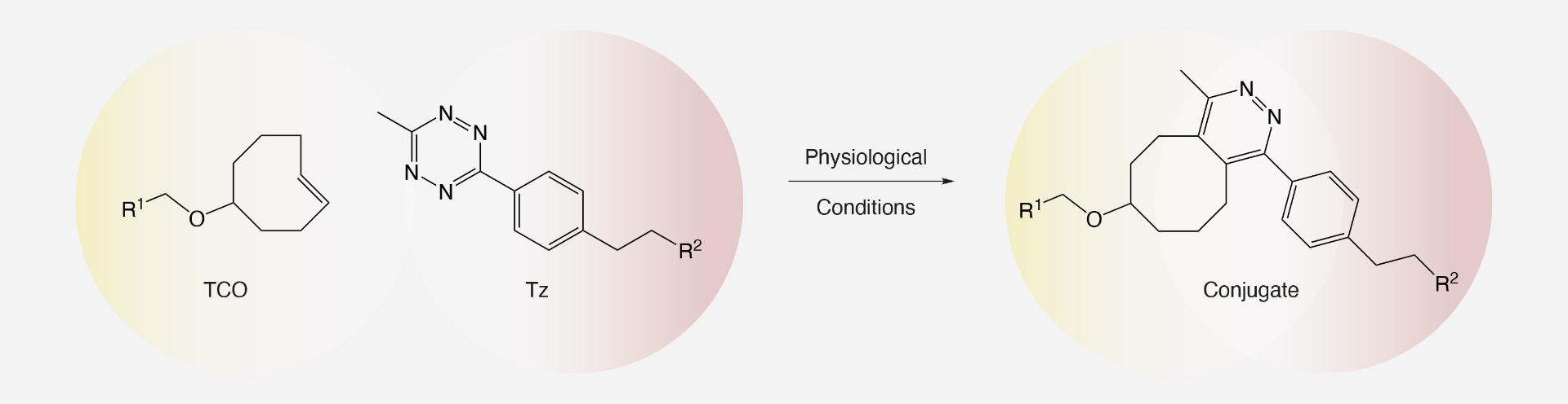 TCO - Tetrazine Ligation